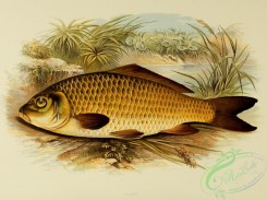 fishes_best-00033 - CARP