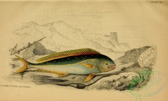 fishes_best-00094 - Dolphin of the Ancients