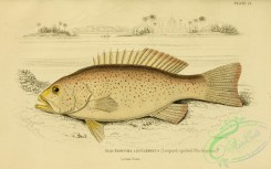 fishes_best-00166 - 021-Leopard-spotted-Plectropoma, plectropoma leopardinus