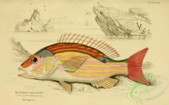 fishes_best-00169 - 024-One spotted Mesoprion, mesoprion uninotatus