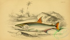 fishes_best-00189 - hydrolycus armatus (L), 2