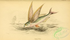 fishes_best-00219 - Flying Fish