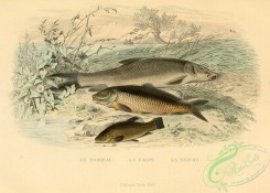 fishes_best-00242 - Barbel, Carp, Tench