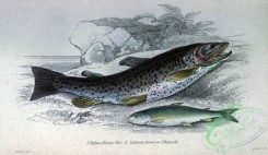 fishes_best-00284 - Salmo Ferox, Salmon trout or Phinock