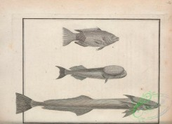 fishes_bw-02049 - 009-unspecified