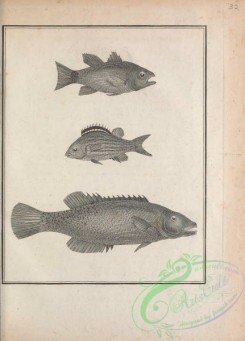 fishes_bw-02072 - 032-unspecified