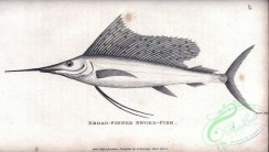 fishes_bw-03513 - 015-Broad-finned Sword-fish