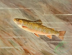 fishes_full_color-00003 - BROOK TROUT