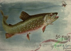 fishes_full_color-00120 - BROOK TROUT