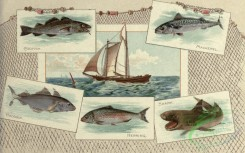 fishes_full_color-00121 - CODFISH, MACKEREL, HADDOCK, HERRING, SHARK