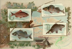 fishes_full_color-00123 - GOLDFISH, YELLOW PERCH, PERCH, CARP