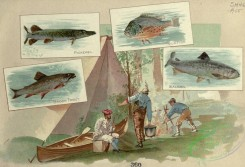 fishes_full_color-00125 - PICKEREL, SUNFISH, BROOK TROUT, SALMON
