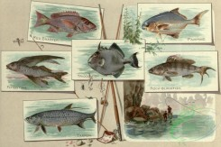 fishes_full_color-00126 - RED SNAPPER, PAMPANO, FLYING FISH, TRIGGERFISH, ROCK-BLACKFISH, TARPON
