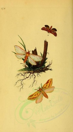 flora_and_fauna-01563 - image [1875x3364]