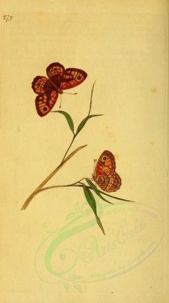 flora_and_fauna-01568 - image [1875x3364]
