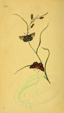 flora_and_fauna-01584 - image [1907x3338]