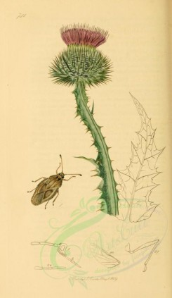 flora_and_fauna-01726 - image [1922x3315]