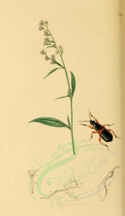 flora_and_fauna-01731 - image [1922x3315]