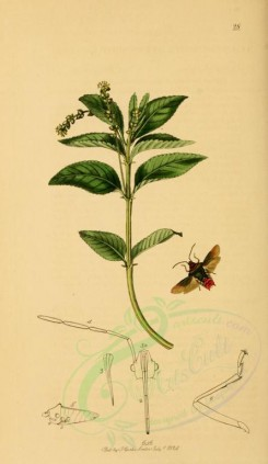 flora_and_fauna-01753 - image [1922x3315]