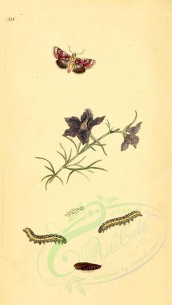 flora_and_fauna-01763 - image [1913x3370]