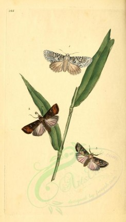 flora_and_fauna-01774 - image [1913x3370]