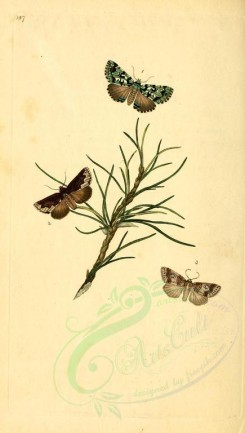 flora_and_fauna-01785 - image [1913x3370]