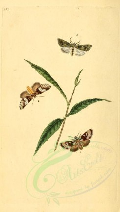 flora_and_fauna-01787 - image [1913x3370]