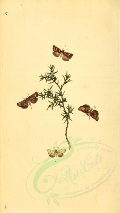 flora_and_fauna-01790 - image [1913x3370]
