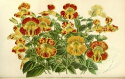 flowers-12638 - mimulus herbaces [3670x2319]