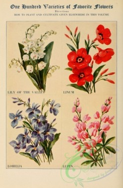 flowers-27212 - Lily of the Valley, Linum, Lobelia, Lupin [2383x3636]