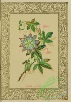flowers-35970 - 004-Passion Flower
