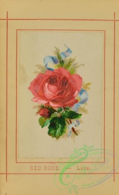 flowers-35997 - 001-Red Rose