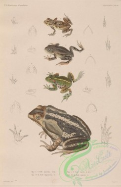 frogs-00038 - 001