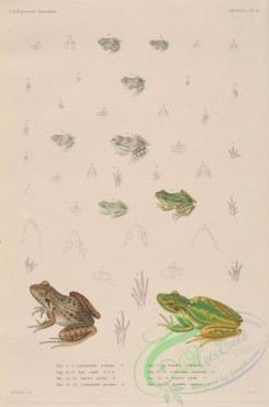 frogs-00041 - 011