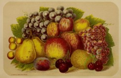 fruits-00808 - Grapes, Apple, Pear, Cherry [3632x2334]