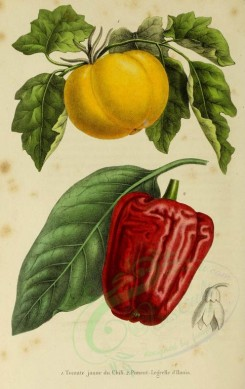 fruits-00824 - Chilian Tomatoe, Red Pepper [1897x3005]