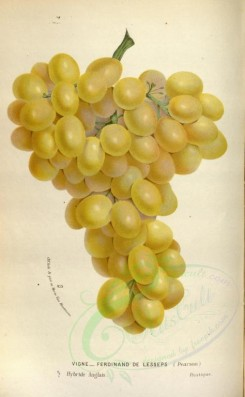 fruits-02522 - Grapes [2219x3594]