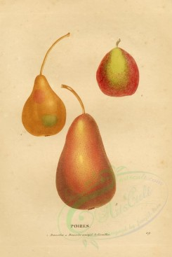 fruits-02748 - Pear, 5 [4100x6132]