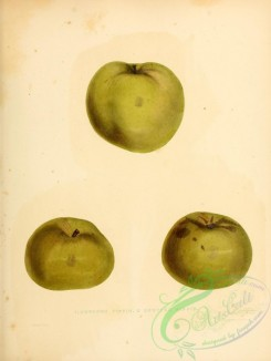 fruits-03224 - Newtown Pippin Apple, Spotted Pippin Apple [2451x3255]