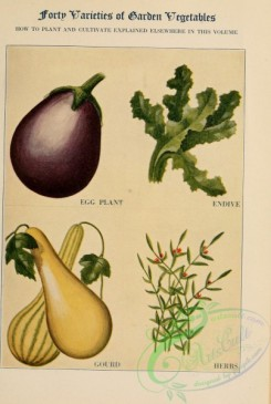 fruits-03558 - Gourd, Herbs, Egg Plant, Endive [2422x3598]