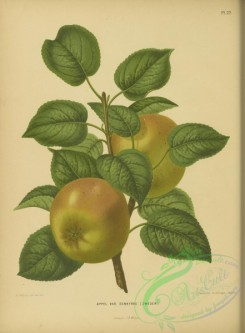 fruits-04481 - Apple, 3