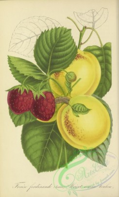 fruits-04505 - Strawberry, Apricot