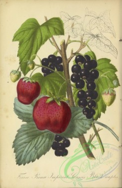 fruits-04508 - Black Currant, Strawberry