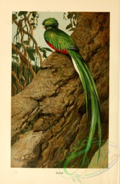 game_birds-00066 - Resplendent Quetzal
