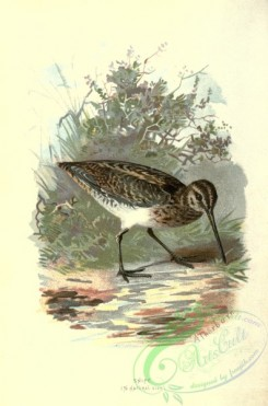 game_birds-00098 - SNIPE