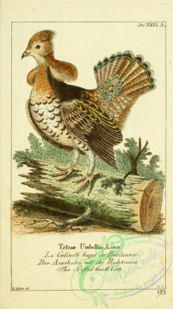 game_birds-00114 - Ruffed Grouse