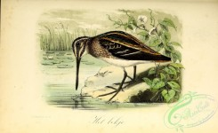 game_birds-00681 - Jack Snipe