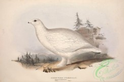 game_birds-00714 - SHORT-TOED PTARMIGAN