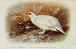 game_birds-00822 - Ptarmigan