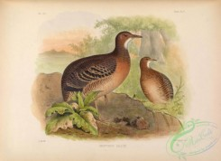 game_birds-01147 - crypturus sallcei